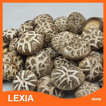 Market prices for China mushrooms
