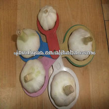 normal /pure white fresh garlic