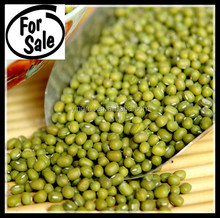 human consuming green mung beans
