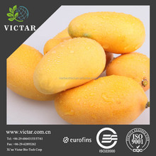 Wild mango seed raw material extract