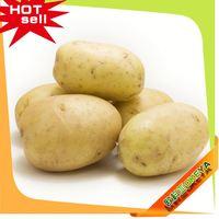 TOP10 Hot Sale China non-gmo potatoes