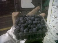 Fresh Chile Blueberries