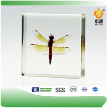 Dragonfly Art Minds Suppliers and Resin Crafts Manufacturers