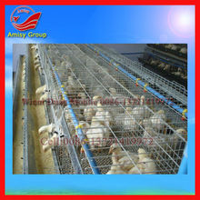 High Quality Automatic Layer Chicken Breeding Cage (0086-13721419972)