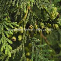 Pure Cedar wood essential oil
