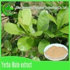 Manufacturer Supplier 100% pure organic Paraguay Tea plant powder bulk