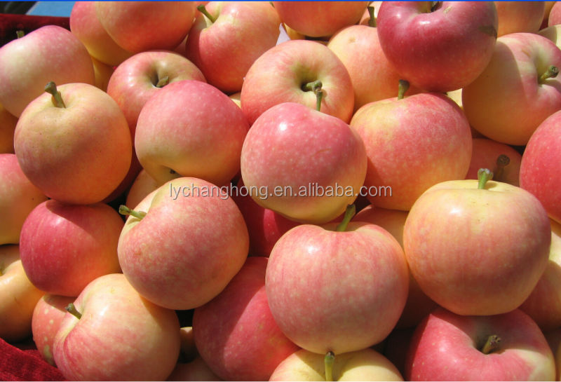 [HOT] fresh apple chinese apple fruit gala
