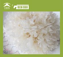 White Agaric Dried fungus