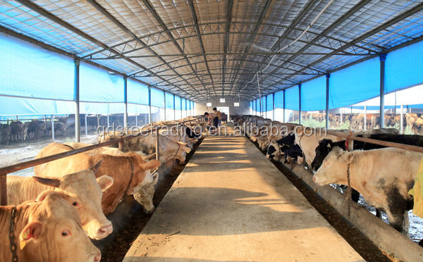 Low Cost Steel Structure Cattle Cow House