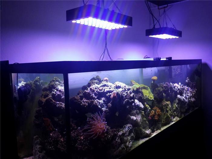 gesamte spektrum 120w dimmbare led aquarium licht aquarium gef hrt lampe f r korallenriff led. Black Bedroom Furniture Sets. Home Design Ideas