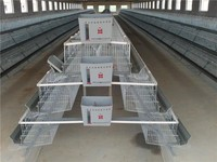 Chicken Cage For Poultry Farm For Nigeria Supplier
