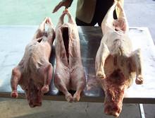 frozen lamb meat