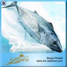 Export Fresh Fish For Canned and Loin