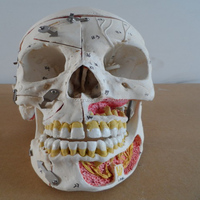 HOT SALES advanced Human skull with blood