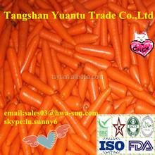 fresh carrot importers from dubai