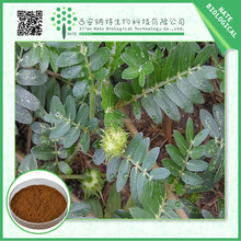High quality natural Tribulus Terrestris Extract 60% Saponins with nice price