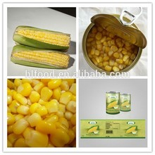 Crop seasonal top quality cheap wholesale corn