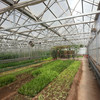 High Quality ISO Bayer uv protected roofing sheets 4mm twin wall polycarbonate greenhouse