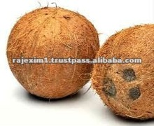 completo de la cáscara de coco para las exportaciones