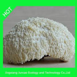 Wholesale Mushroom Prices Herbal Extract Monkey Head Mushroom, Lion's Mane Mushroom extract, Bearded Tooth Mushroom powder