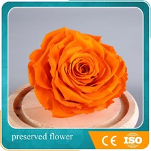 New Fashion Flower Decoration Natural Preserved Rose house Decoration