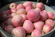 Wholesale Red Mature Apple Price Fresh Apple