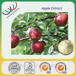 Free sample HACCP FDA Kosher certificate Apple extract with 90% phlorizin by HPLC / Anti-microbial Treat diabetes