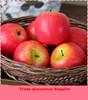 Artificial fake food model,Lifelike high simulation fake apple display/Yiwu sanqi craft factory