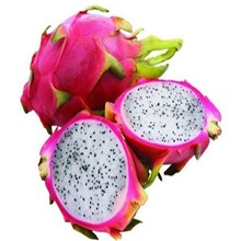 manufacture supply low price pure100%naturaldragon fruit extract powder