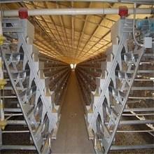 2015 chicken breeding cage cage for chicken used chicken wire cage mesh