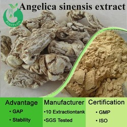 Ligustilide dong quai extract angelica sinensis extract