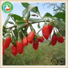2015 most popular freeze dried goji berry in organic fruit