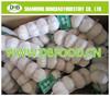 chinese shandong garlic pure white garlic