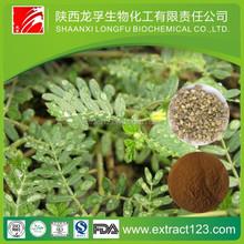 Factory Supply Natural Tribulus Terrestris 90% Saponins