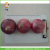 /product-gs/fresh-chinese-onion-in-the-lowest-price-for-export-60357465554.html