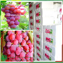grape export packing