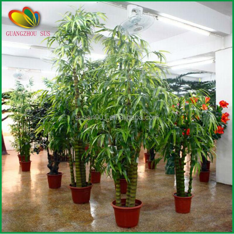 Plantas de exterior baratas dise os arquitect nicos - Bambu planta exterior ...