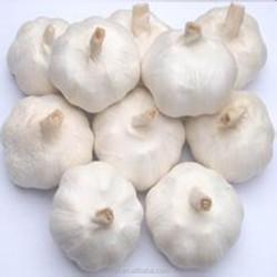 fresh garlic snow white pure white 6.0cm 6.5cm 7.0cm for Brazil 10kg carton best quality Grade A