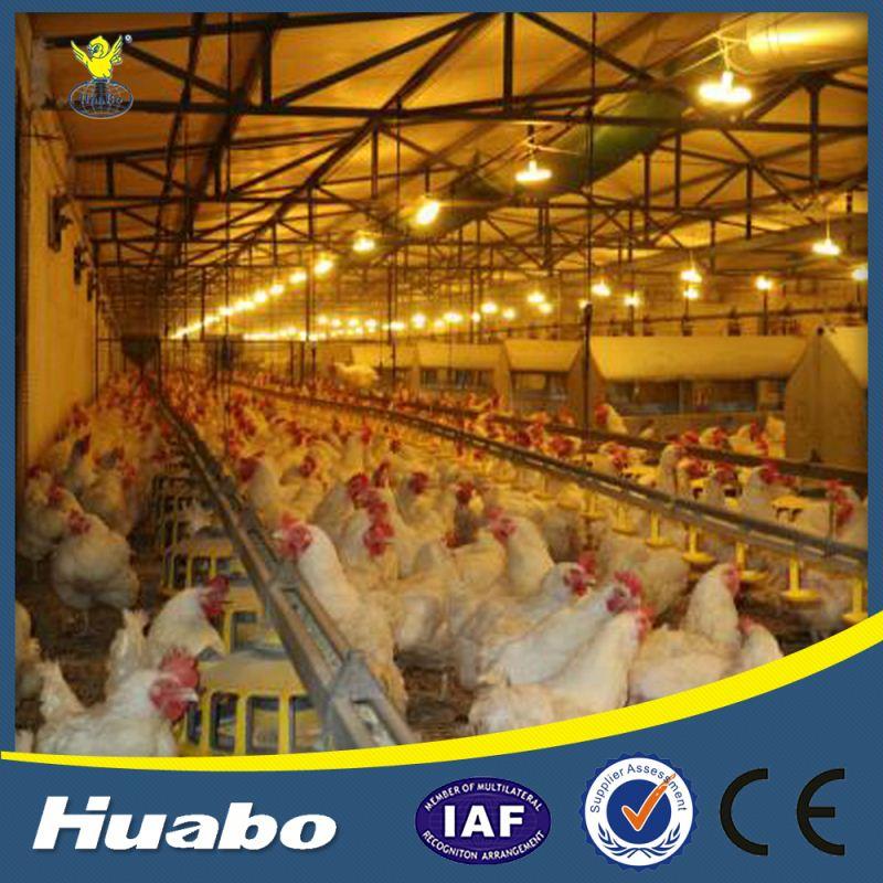 Manual de Calidad superior la Puesta De Huevos de Pollo Precio De Nido de Pájaro