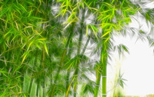 Canvas special lighted bamboo prints