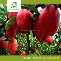 red star apple fruit with best price for fresh apple