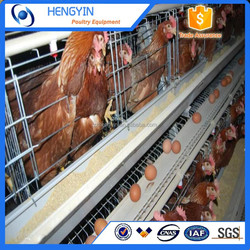 High Capacity Chicken Cage A Type Layer Breeding Cage for Sale