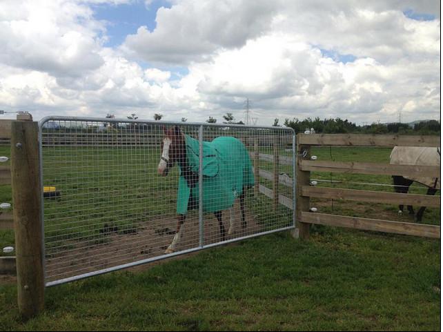 Mesh Fencing nz Iron Mesh Farm Fence Gate