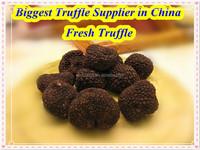 black truffle tuber indicum for sale