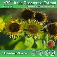 Natural Elecampane flower extract, Inula Racemosa
