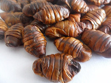 Dried and Frozen Dried Silkworm Chrysalis For Chicken Food