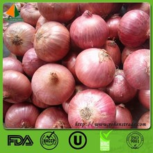 New crop red and yellow onion price ton