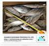 New arrival frozen fish mackerel prices