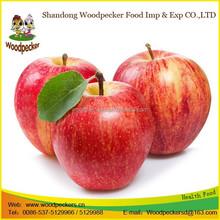 fresh crisp Fuji sweet apple exporter in China