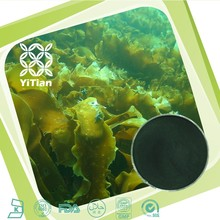 GMP Certified 100% Seaweed Extract Fucoxanthin